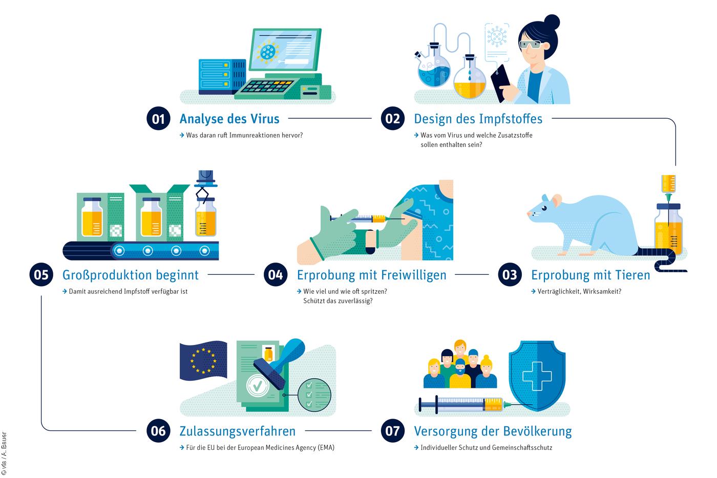 Illustration der sieben Etappen zur Entwicklung eines neuen Impfstoffs